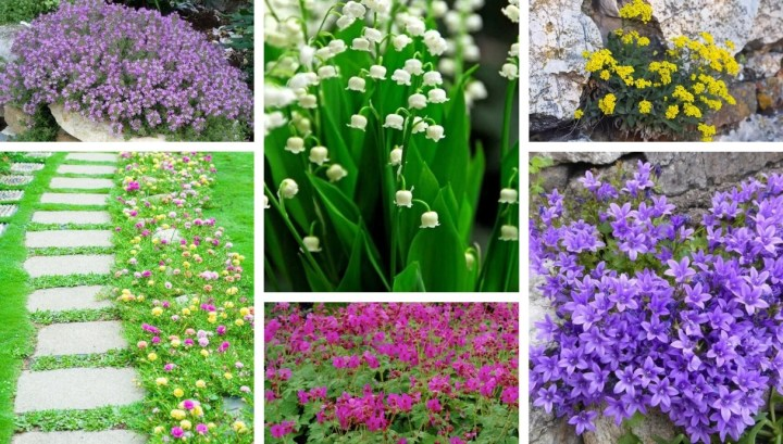 20 Most beautiful ground cover flowers – great ideas for a perfect garden
