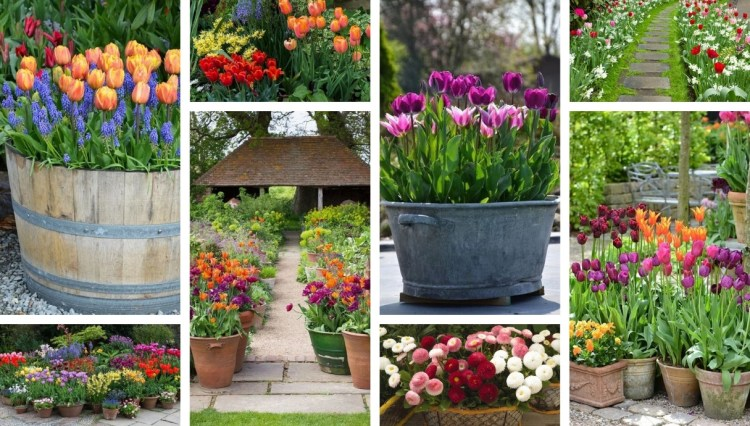 Welcome spring in the yard and garden: 50 colorful flower decorations