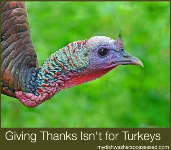 giving thanks isn't for turkeys
