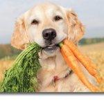 pegetables dog treats