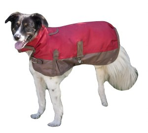 fashion pets waterproof dog coats