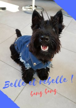 Belle et rebelle !.jpg
