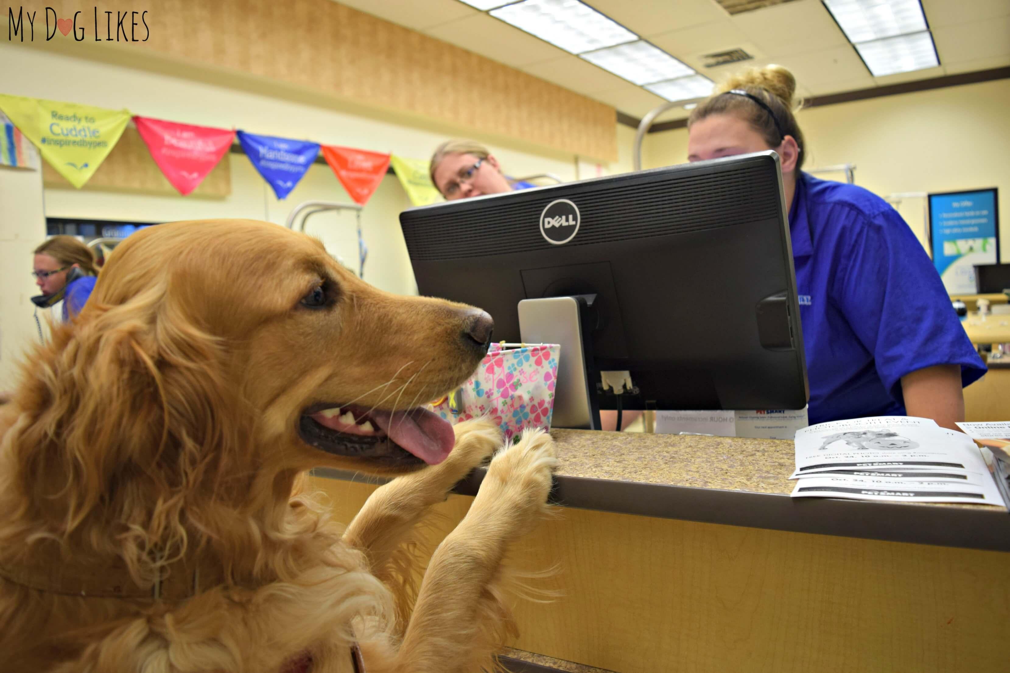 PetSmart Grooming Review  Looking Sharp Feeling Good