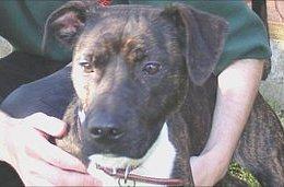 georgie sex change dog Dog Gets Sex Change Operation