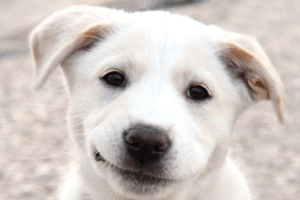 dog smiling Dog Whisperer Cesar Millan Makes a Change