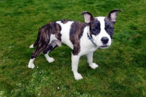 Goofy Dog Rehoming with the RSPCA