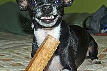 220px Do not take his bone Why Do Dogs Yawn?