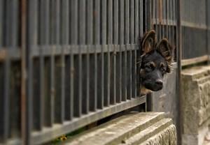 dog-fence_0