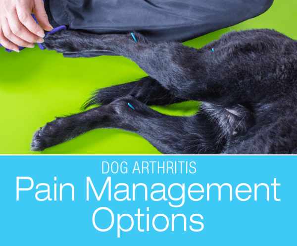 Talk to Me About Dog Arthritis: Pain Management