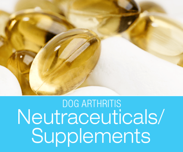 Talk to Me About Dog Arthritis: Supplements