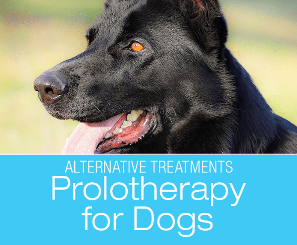Prolotherapy for Dogs: Prolotherapy is a non-surgical treatment used to increase tendon and ligament strength and relieve arthritis in dogs.