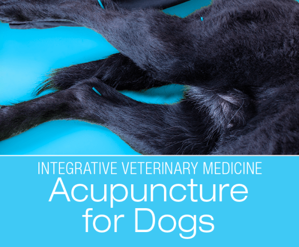 Acupuncture for Dogs: Acupuncture Is Not Voodoo