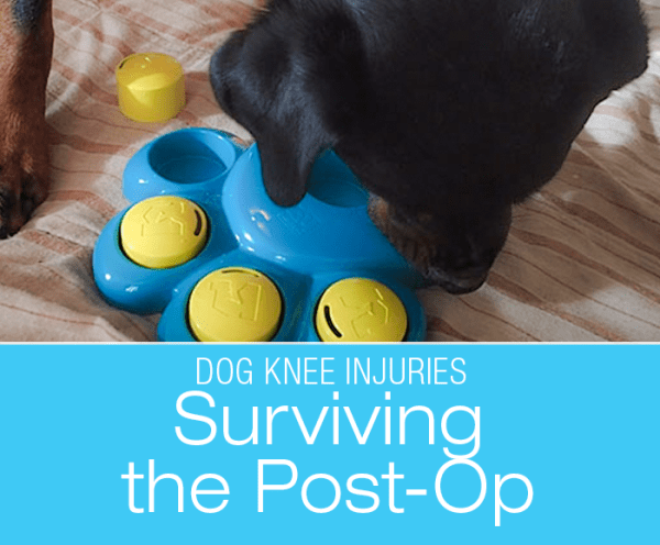 Surviving The Post-Op: After Your Dog's ACL/CCL Surgery
