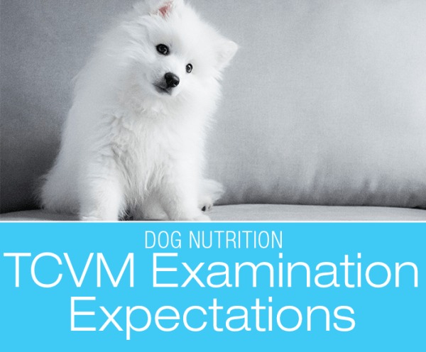 TCVM Consultation: What To Expect During A Traditional Chinese Veterinary Medicine Exam