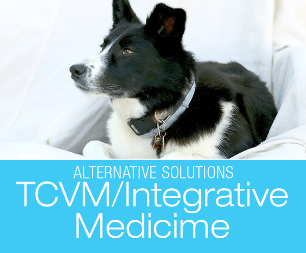TCVM for Dogs: Four Paws, Five Directions—The Theory Behind The Traditional Chinese Veterinary Medicine