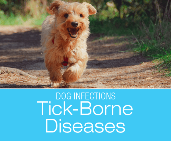 Canine Tick-Borne Diseases: The Ticking Bomb