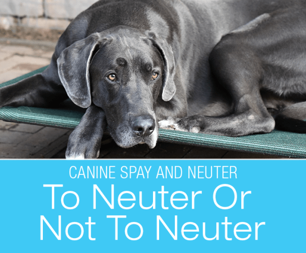 Canine Spay and Neuter: To Neuter Or Not To Neuter… That Is The Question