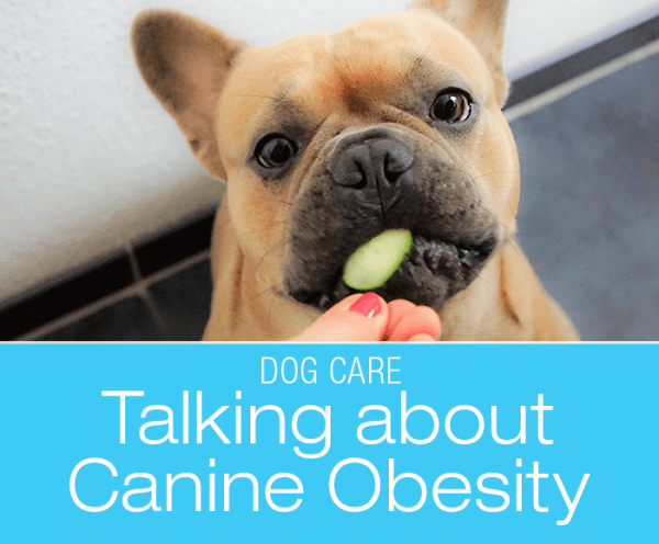 Breaching the Subject of Canine Obesity: No TV Tonight!