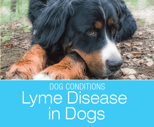 Lyme Disease in Dogs: Lyme Is Lame (Pun Intended)