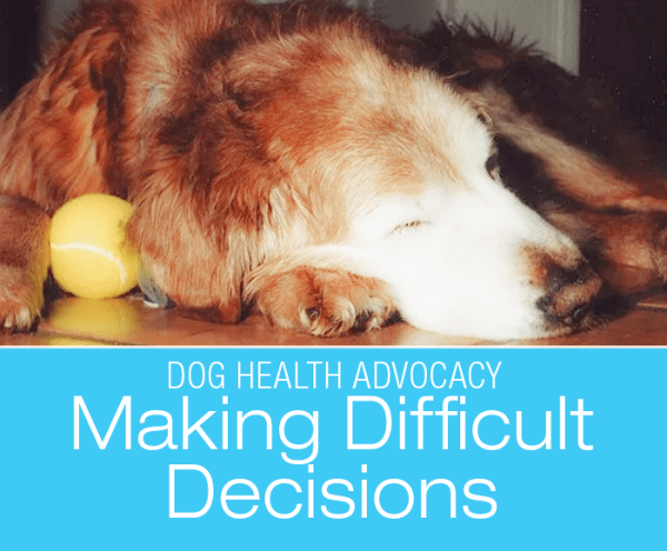 Loss of Appetite in a Golden Retriever: Making Tough Medical Decisions For Your Dog—Lily's Story