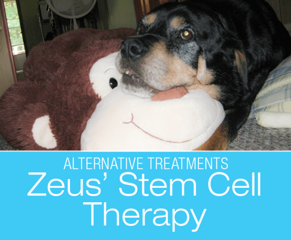 Canine Stem Cell Therapy: Zeus Gets Stem Cell Treatment