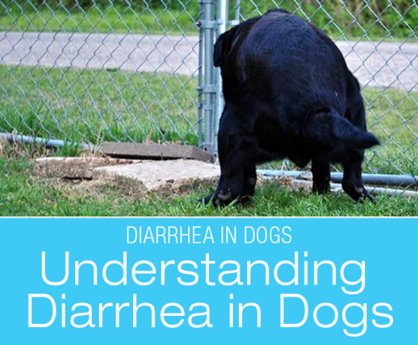 Understanding Diarrhea in Dogs: A Tale of Many Tails—and What Came Out From Underneath Stories from My Diary-rrhea (part I)