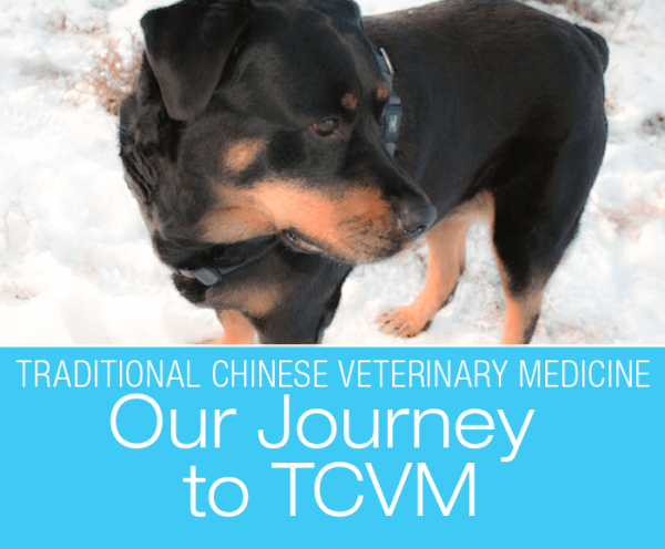 Traditional Chinese Veterinary Medicine: Our Journey to TCVM