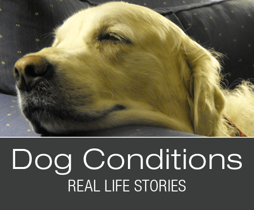 Dog Conditions - Real-Life Stories: Buddy's Nosebleeds
