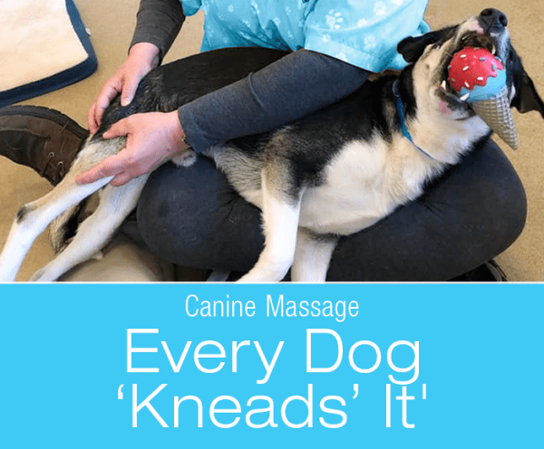Canine Massage--Every Dog 'Kneads' It'. Benefits and Techniques.