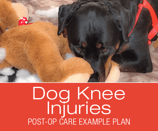 Cruciate Ligament (ACL/CCL) Surgery Post-Op Care: Example Plan