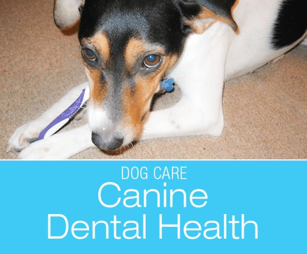 Dental Health in Dogs: Talking Teeth