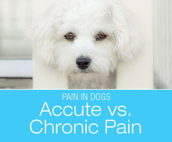 Chronic Vs Acute Pain In Dogs: What Is The Difference?