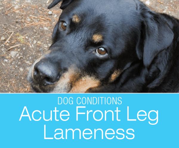 Acute Front Leg Lameness: Jasmine's Sore Leg