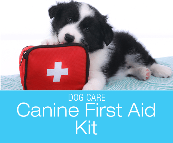 Dog First Aid Kit: What's In Yours?