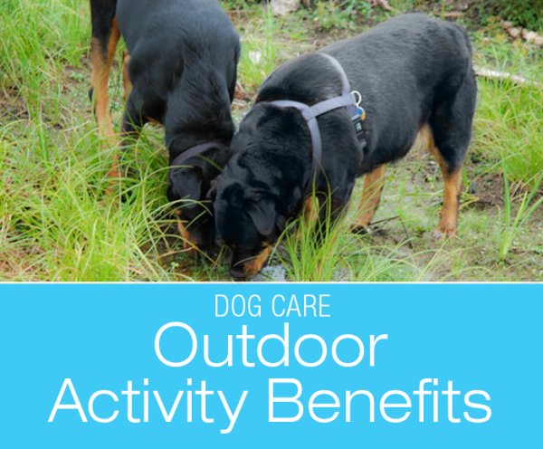 The Healing Power Of The Outdoors: Can Spending Time Outside Benefit a Dog's Health?