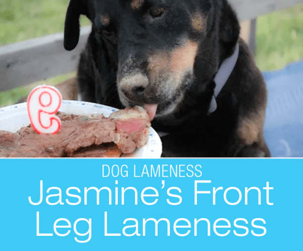 Dog Front Leg Lameness: Is Crawling Under Things Some Kind Of Secret Physical Therapy?