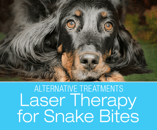 Laser Therapy for Snake Bites: Something You Wouldn't Think Cold Laser Could Be Good For
