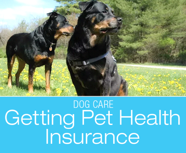 Getting Pet Health Insurance: Does Being Insured Equal Being Covered?