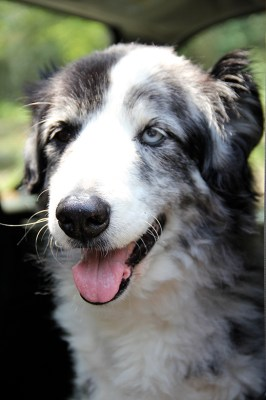 New Solution To An Old Problem For Dogs With Mobility Issues