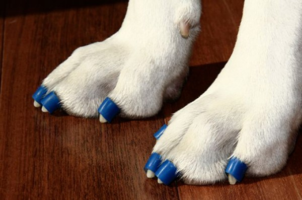 Dr. Buzbys ToeGrips for Dogs