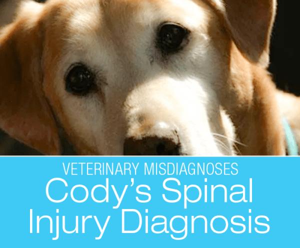 sdiagnosed Lameness in a Dog: Cody's Spinal Cord Injury Diagnosis