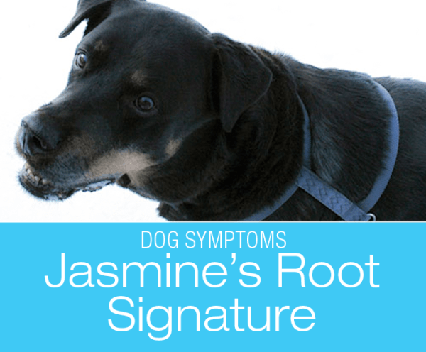 Root Signature Pain in Dogs: Elbow Problem Or Root Signature?