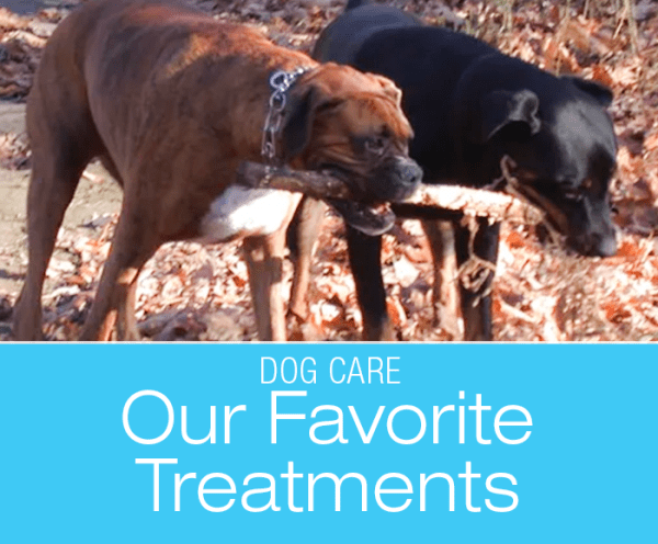 Our Favorite Veterinary Treatments: Treatments Jasmine Benefited From The Most