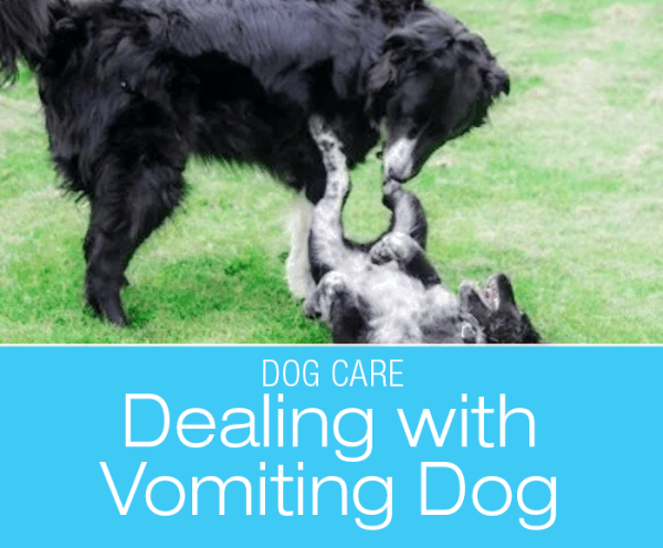 Dealing with a Vomiting Dog: The Gross Factor—When A Dog Vomits In Your Hands