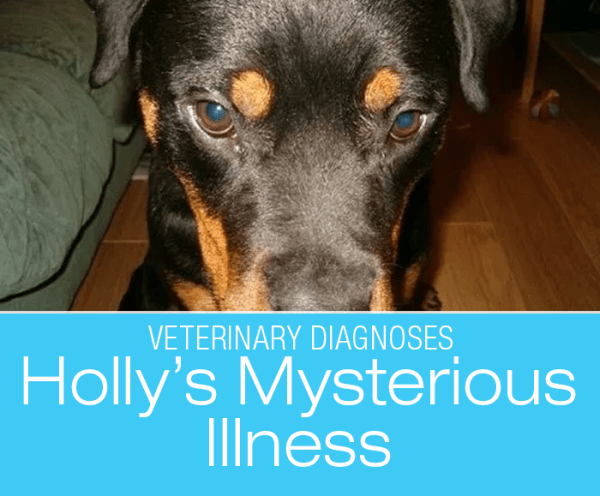 Complicated Diagnosis in a Dog: Holly And Her Illness