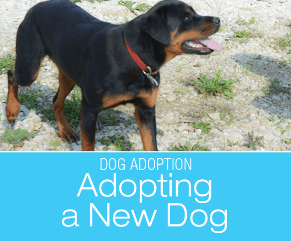 Adopting a New Dog: From The End Of A Lead Line To Casa Jasmine—Meet Cookie, Our New Adoptee