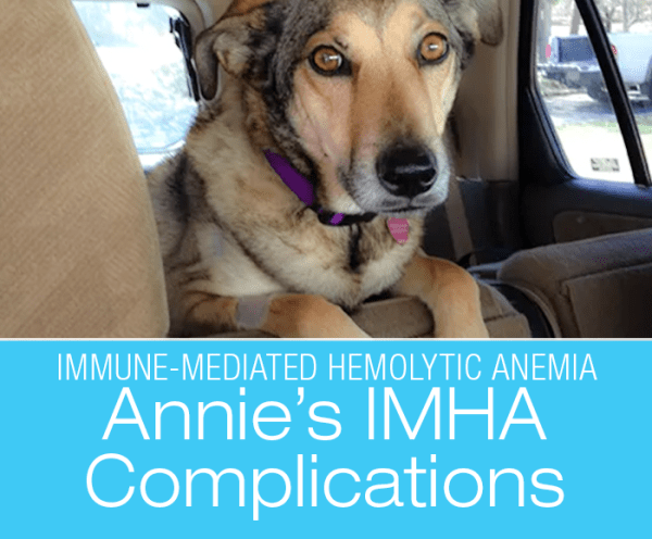 IMHA Complications in a Dog: Whitney's Lost Battle