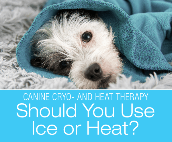 Canine Cryo- and Heat Therapy: Should I Use Ice or Heat, Doc?