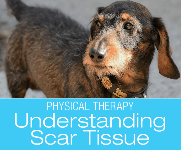 Understanding Scar Tissue: Is it Too Much of a Good Thing?