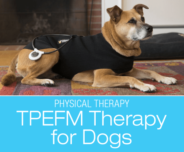 TPEFM Therapy for Dogs: Staying in the Loop with Targeted Pulsed Electromagnetic Field Therapy